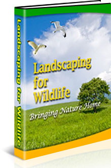 all-about-landscaping-for-wildlife-ebook-cover